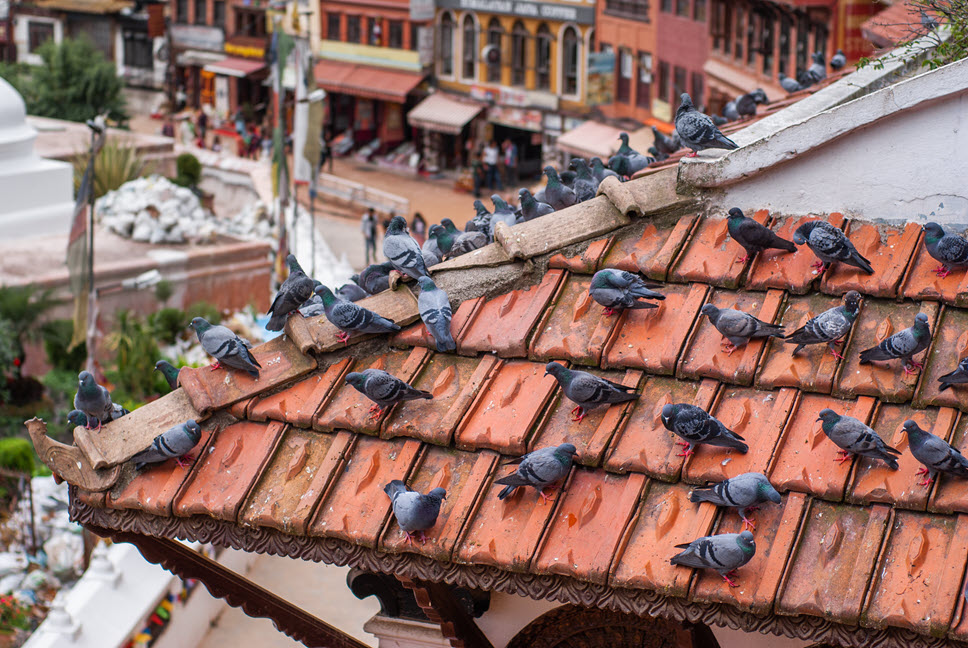 2 Possible Solutions On How to Solve the Pigeon Problem