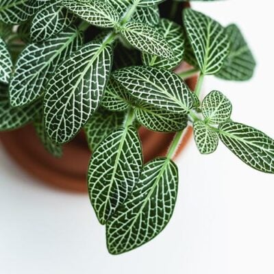 25 Most Beautiful Houseplants You Need To Know About Featured