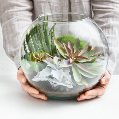 6 Reasons Why Unique Succulents Make The Perfect Gift featured