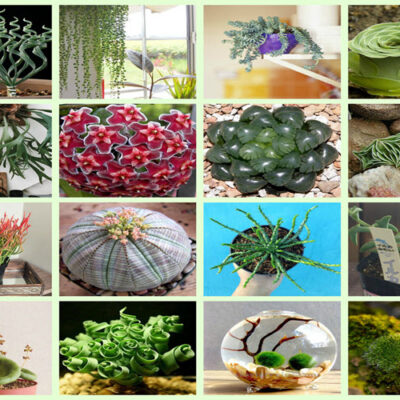 FEATURED 15 Strange And Beautiful Houseplants You Need To Know About
