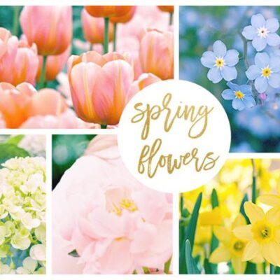 FEATURED hero-spring-flowers-720x500