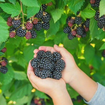 How To Care For Your Fruit-Bearing Plants FEATURED
