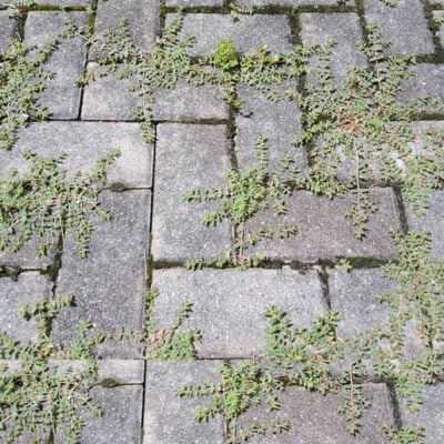 How To Finally Kill Weeds On Your Brick Patio For Good FEATURED