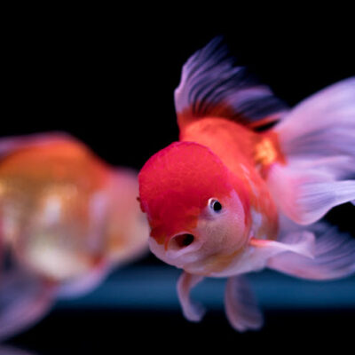 The Best Way To Move Your Aquarium and Aquatic Pets FEATURED