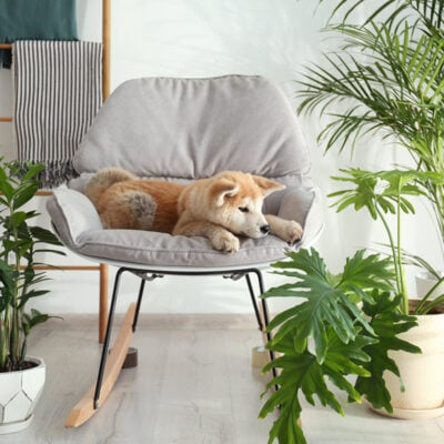 You Need To See These Easy To Care For Indoor Plants FEATURED